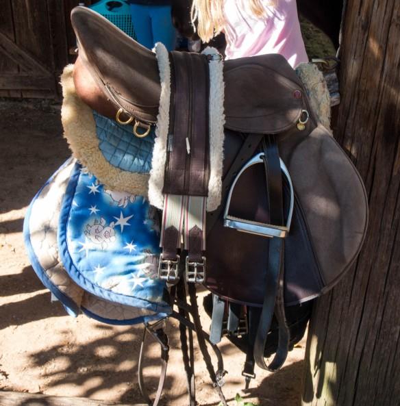 Catalina's Horseshow-260062