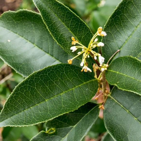 Bsackyard P;ants-3018