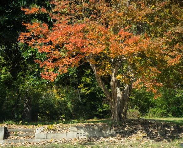 Home, Fall Trees-6906