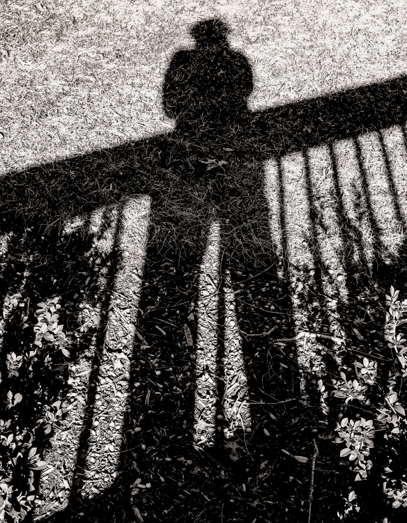 Home Shadows from Deck012020154633-Edit