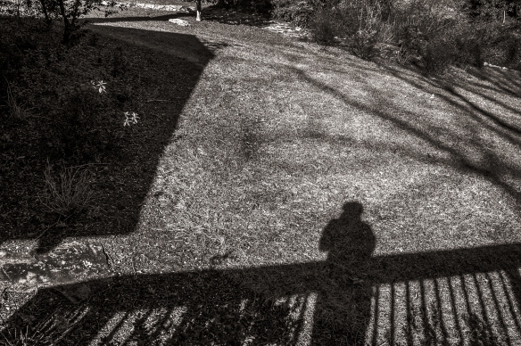 Home Shadows from Deck012020154638-Edit