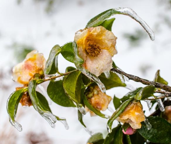 Snow-49DeckHome