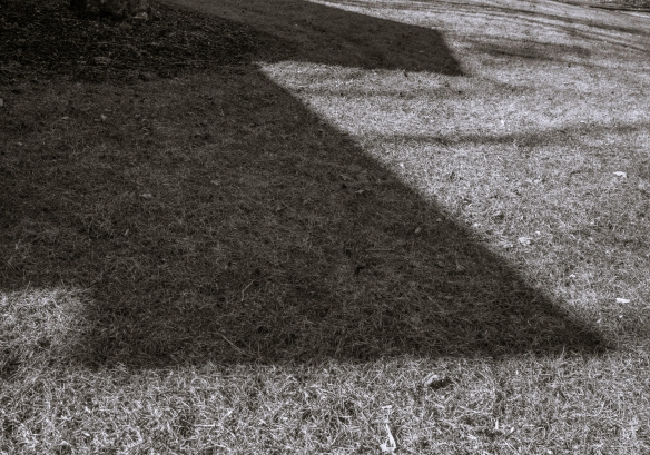 untitled shoot-0050