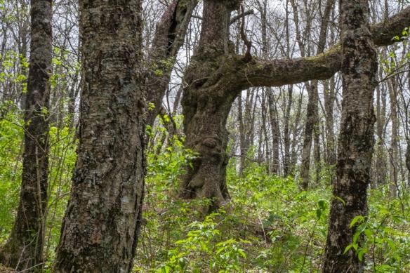Craggy Garden Trail, NC-100