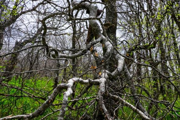 Craggy Garden Trail, NC-106