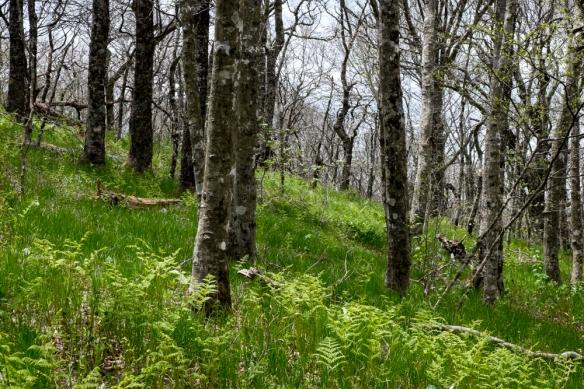 Craggy Garden Trail, NC-124