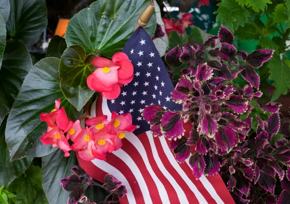 Flags and Flowers, Landrum-51