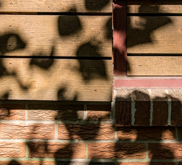 Home with Leaves and Shadow100620155489
