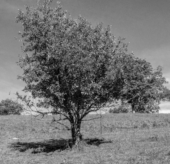 Cataloochee Ranch Maggie Valley-176-2 (1)