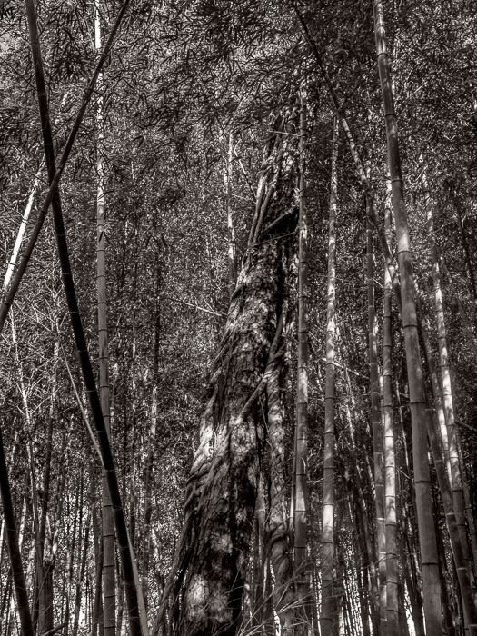Clemson bamboo Forest with Sam and Al-2437-Edit