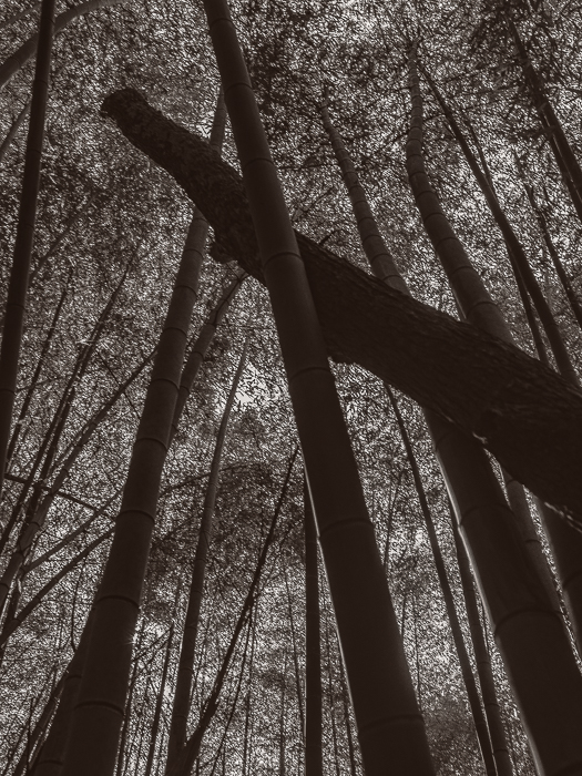 Clemson bamboo Forest with Sam and Al-2463-Edit-2