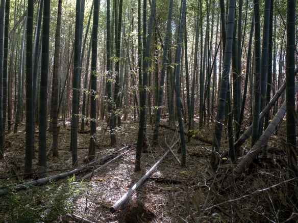Clemson bamboo Forest with Sam and Al-2488