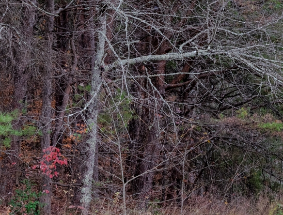 Forest in Late Fall-81