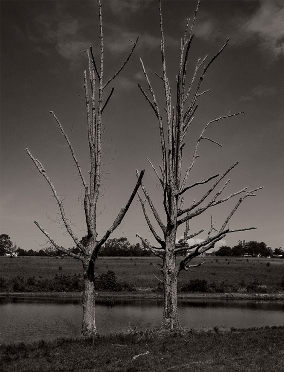 Al TripFarm PondTrees, Reflections05262016 (13)