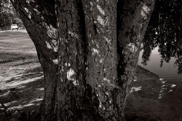 tree_DSC1599