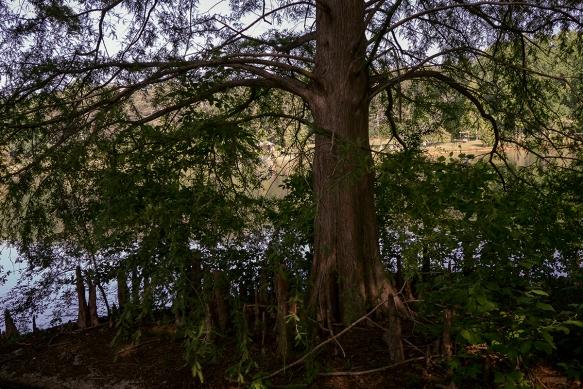 tree_DSC1609