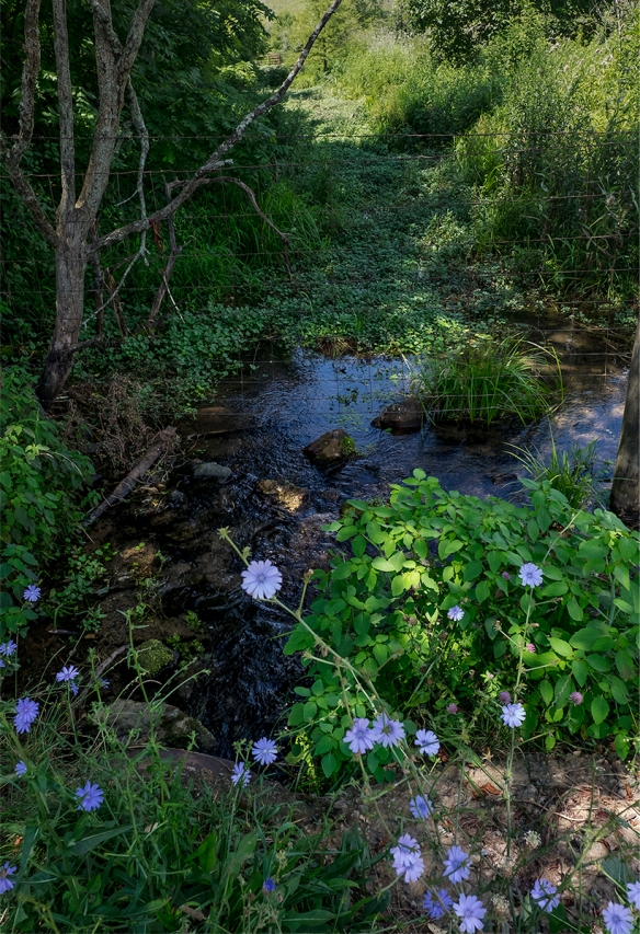 Trip to Ross'sFarmscapes07212016 (111)