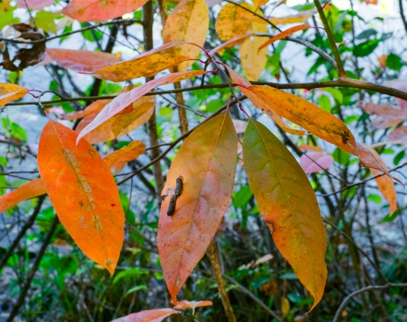alanlakeleaves-trees11042016-23