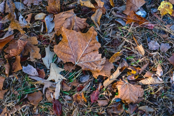 alanlakeleaves-trees11042016-81