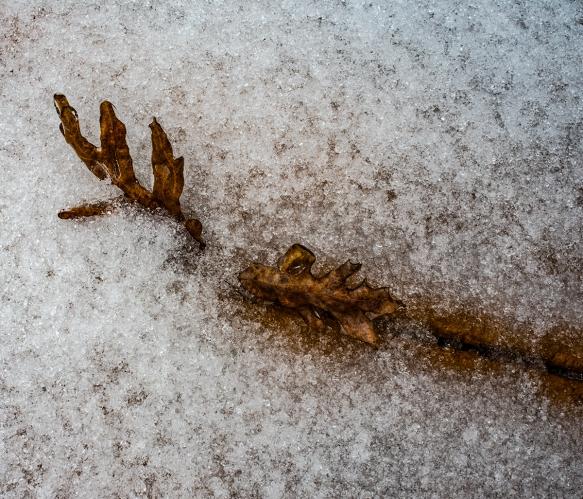 Snow-80DeckHome