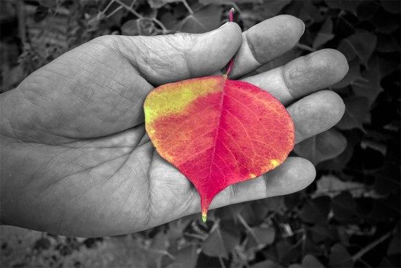 SamHandbrown-leaf3164