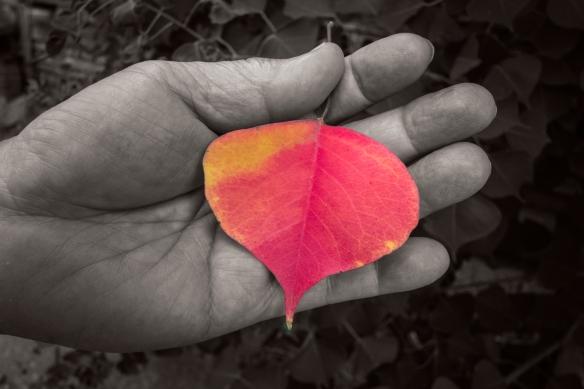 SamHandbrown leaf3165 copy@1,25x