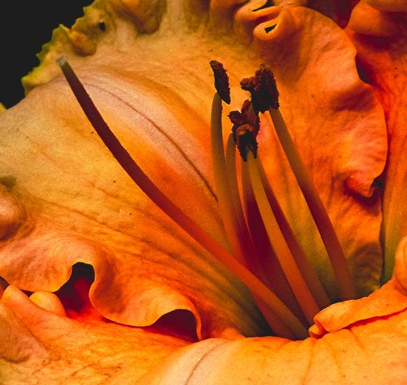Furmanflowers_000076