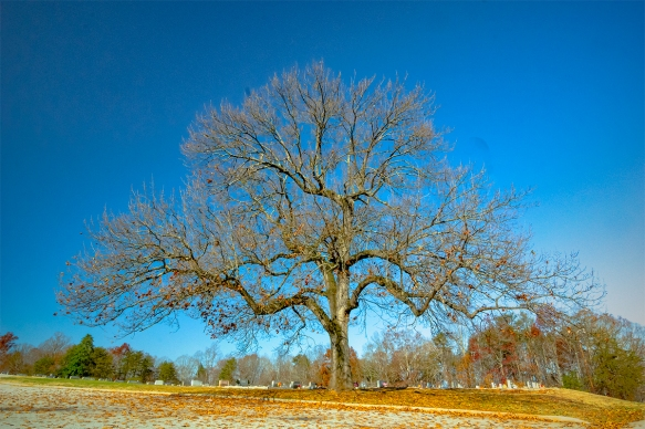tree-graeyard_IMG7578
