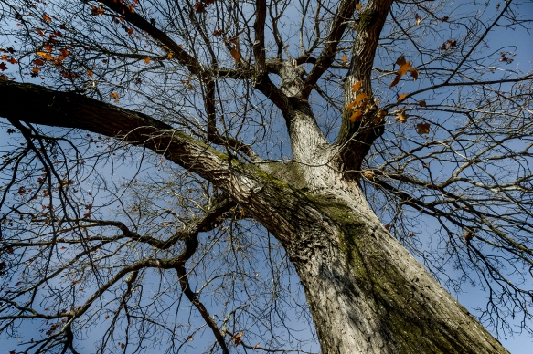 tree_IMG7545