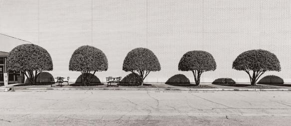 TripAlTrees, Mall651