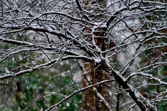 snow_DSC3029