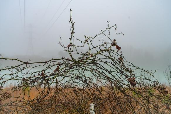Trip, Al,, fogwoods_050