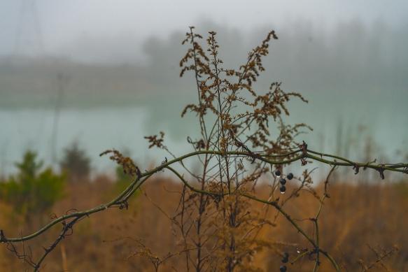Trip, Al,, fogwoods_053