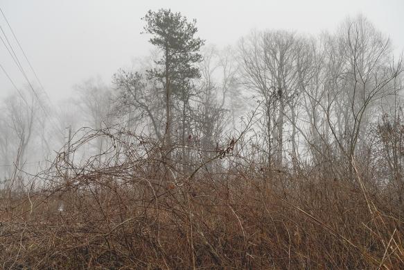 Trip, Al,, fogwoods_910