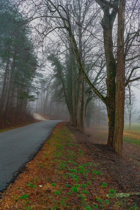 Trip, Al,, fogwoods_925