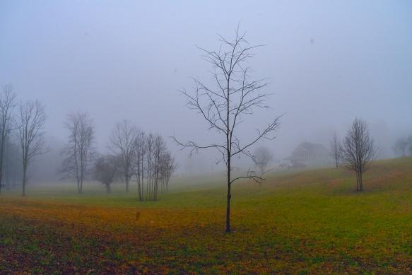 Trip, Al,, fogwoods_935