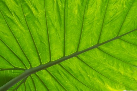 CTripBiltmore ConservatoryJee, Ray230
