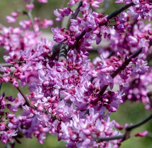 homebedbud bloomsbackyard106