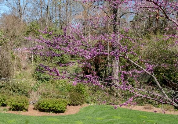 homebedbud bloomsbackyard109