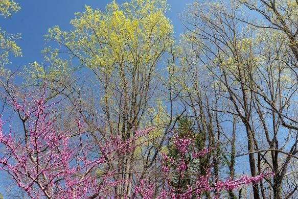 homebedbud bloomsbackyard115