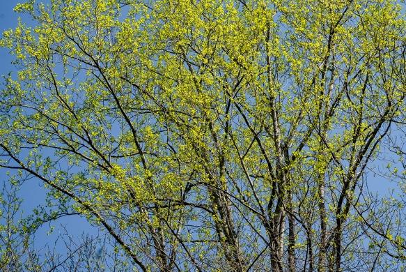 homebedbud bloomsbackyard121