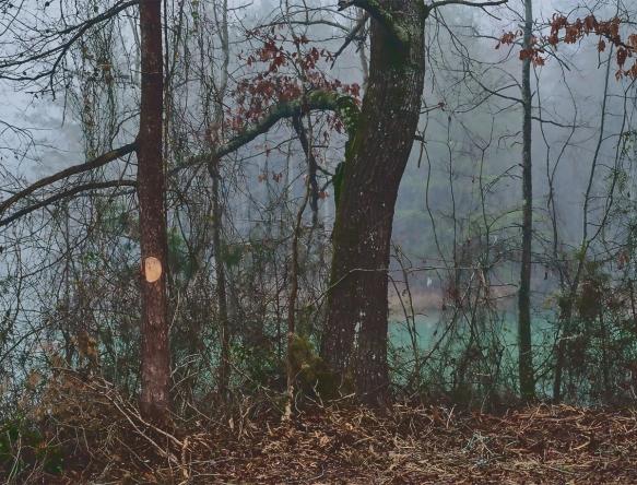 Trip, Al,, fogwoods_030