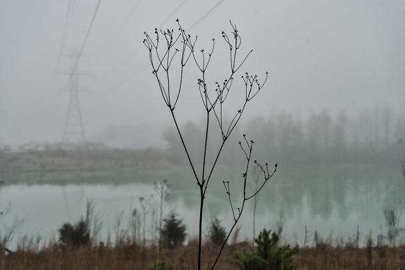 Trip, Al,, fogwoods_060