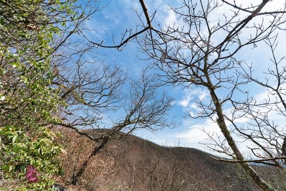 Pisgah Trip, Alicetrail, treesshadows395