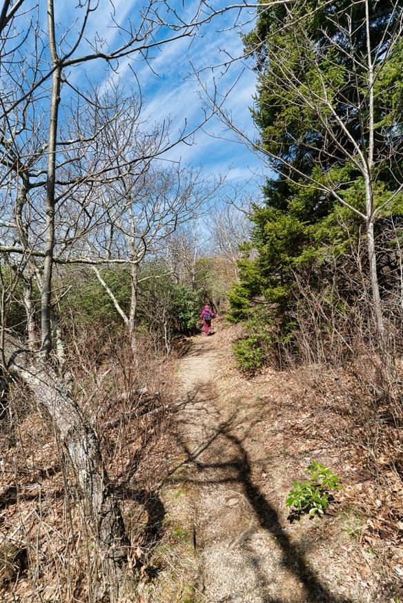 Pisgah Trip, Alicetrail, treesshadows409