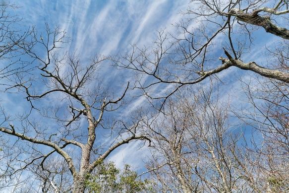 Pisgah Trip, Alicetrail, treesshadows414