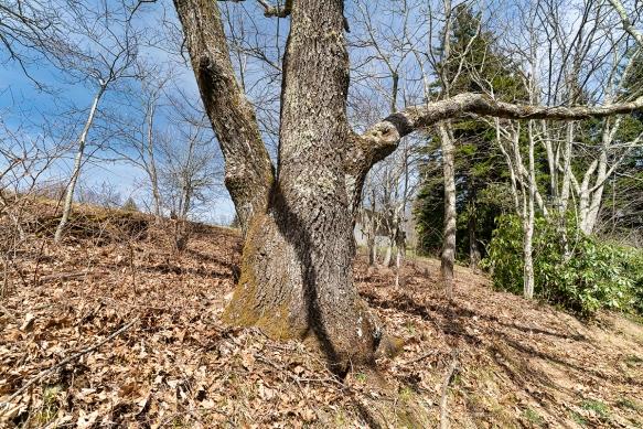 Pisgah Trip, Alicetrail, treesshadows474