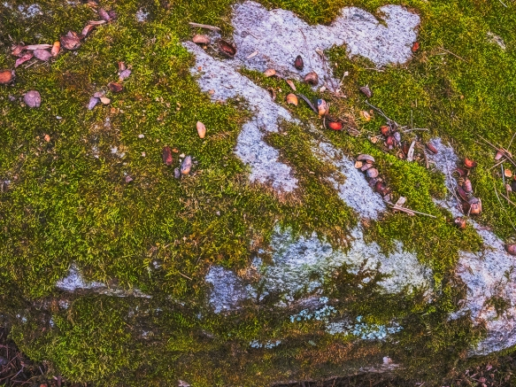 Mossy Rock_DSF0076