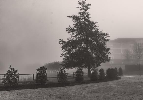 202001256399homebackyard fog