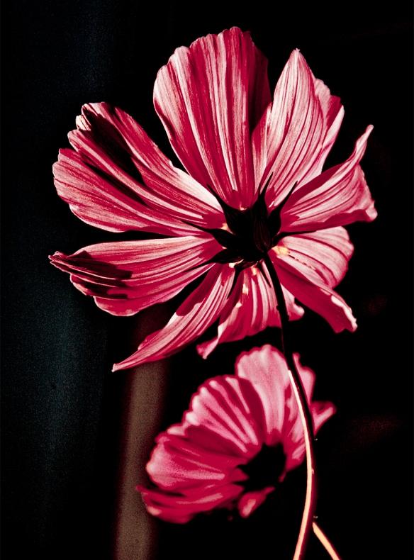 Red Flower_MG_0835